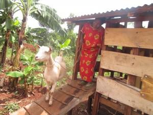 GOAT Hanifa Kaggwa, Gayaza Sub County