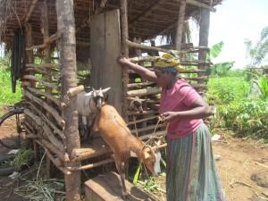 GOAT Mariam Kayigamba, Gayaza sub county